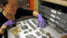 Kay Sunahara in collection storage examining fragments of Roman scale mail armour from Dura Europos, Syria