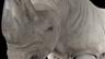 Le rhinocéros blanc du Sud