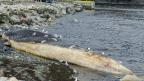 Ma première journée à Trout River (Terre-Neuve) : l'arrivée des biologistes du ROM pique la curiosité des villageois
