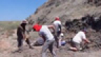 Digging Dinosaurs: Searching in Canada's Badlands
