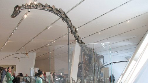 An in-gallery photograph of a long-necked sauropod